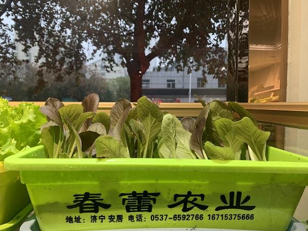 有机蔬菜图片
